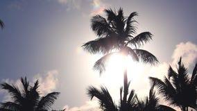 Exotisch eiland Kokosnotenpalmen en tropisch strand De zomervakantie op de Cara?ben stock videobeelden