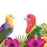 Exotisch en tropicas vector illustratie