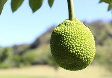 Exotisch fruit. Brood fuit royalty-vrije stock foto's