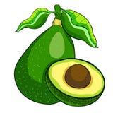 Exotisch fruit van tropische avocado Vector illustratie stock illustratie