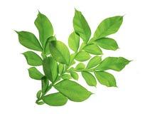 Exotisch groot tropisch wildernisblad, royalty-vrije stock foto