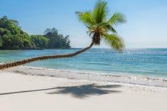 Exotisch Strand Kokosnotenpalm op tropisch strand en turkooise overzees op het eiland van de de zomervakantie royalty-vrije stock foto's