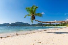 Exotisch Strand Kokosnotenpalm op tropisch strand en turkooise overzees op het eiland van de de zomervakantie stock afbeeldingen