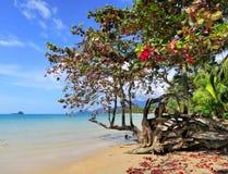 Exotisch strand in Thailand Royalty-vrije Stock Afbeeldingen