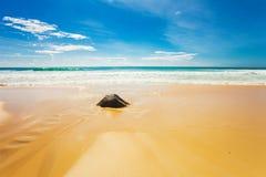 Exotisch tropisch strand. stock afbeeldingen