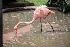 Exotisch vogel drinkwater royalty-vrije stock afbeelding