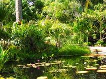Exotisch wildernislandschap met vijver royalty-vrije stock afbeeldingen