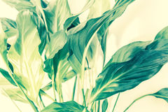 Exotische Betriebsweißer Hintergrund mit grünen Blättern Lizenzfreie Stockfotos