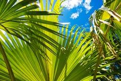 Exotische Blätter mit dem Himmel Stockfotografie