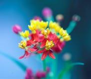 Exotische bloem Royalty-vrije Stock Afbeelding