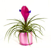 Exotische bloem Royalty-vrije Stock Foto