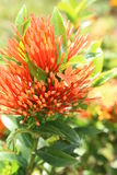 Exotische bloem Stock Fotografie