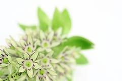 Exotische bloem royalty-vrije stock foto's