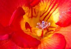 Exotische bloem Stock Foto's