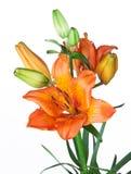 Exotische bloemen royalty-vrije stock fotografie