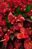 Exotische bloemen Royalty-vrije Stock Afbeelding