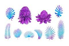 Exotische Bloemen, de Tropische elementen van het Bladerenontwerp Vector bloemenillustraties royalty-vrije illustratie