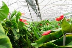 Exotische bloemen in een serre Royalty-vrije Stock Afbeelding