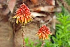 Exotische Blume Lizenzfreies Stockfoto