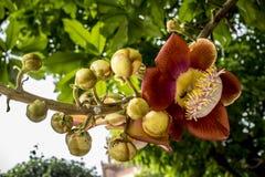 Exotische Blume lizenzfreies stockbild