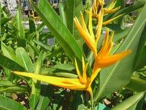 Exotische Blume Stockfotografie