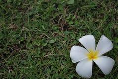 Exotische Blume auf Gras Lizenzfreie Stockfotografie