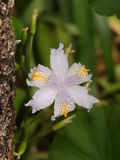 Exotische Blume im Garten Stockfoto