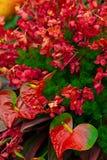 Exotische Blumen Lizenzfreies Stockfoto