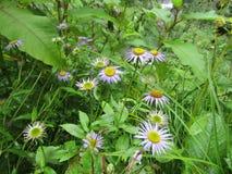 Exotische Blumen am Tal von Blumen Stockfoto