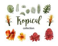 Exotische Blumen, tropische Blattgestaltungselemente Vektorblumenillustrationen