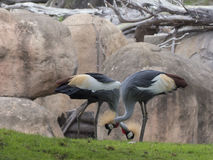Exotische dierentuinvogels Stock Fotografie