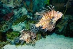 Exotische Fische. Stockfoto