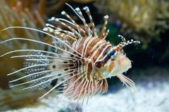 Exotische Fische Stockfotos