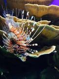 Exotische Fische Stockfoto