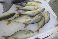 Exotische Fische Lizenzfreies Stockbild