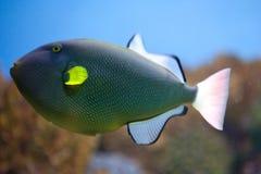 Exotische Fische im Becken Stockbilder