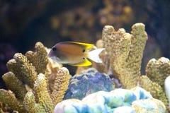 Exotische Fische im Becken lizenzfreie stockbilder