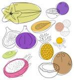 Exotische Früchte Stockfotos