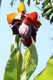 Exotische fruitBloem royalty-vrije stock afbeelding