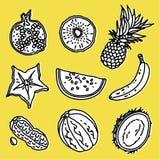 Exotische geplaatste vruchten Stock Afbeelding