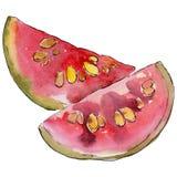 Exotische Guavenwildfrüchte in einer Aquarellart lokalisiert Lizenzfreie Stockfotos