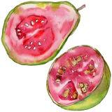 Exotische Guavenwildfrüchte in einer Aquarellart lokalisiert Lizenzfreies Stockbild