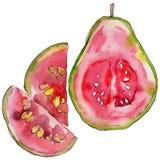 Exotische Guavenwildfrüchte in einer Aquarellart lokalisiert Stockbild