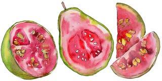 Exotische Guavenwildfrüchte in einer Aquarellart lokalisiert Lizenzfreie Stockbilder