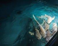Exotische Haifische in Meer lizenzfreie stockfotos
