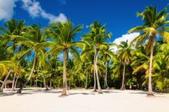 Exotische hoge palmen op een wild strand tegen de azuurblauwe wateren van de Caraïbische Zee, Dominicaanse Republiek royalty-vrije stock fotografie