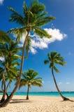Exotische hoge palmen op een wild strand tegen de azuurblauwe wateren van de Caraïbische Zee, Dominicaanse Republiek Royalty-vrije Stock Foto's