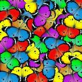 Exotische kleurenvlinder Royalty-vrije Stock Foto's