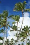 Exotische kokosnotenpalmen royalty-vrije stock foto's