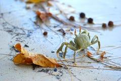 Exotische Krab op Strand royalty-vrije stock foto's